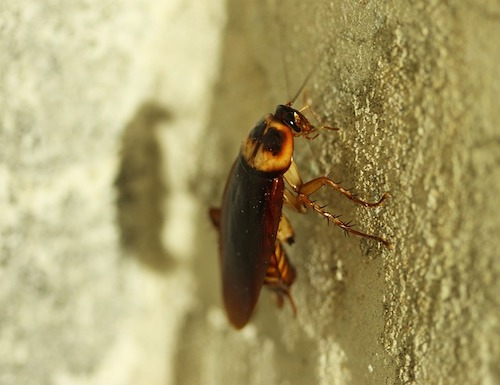 cockroach on a wall