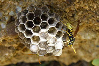 small wasp nest